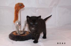 3 süße Kitten suchen neue Kuschelhöhle