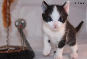 Foto 2 3 süße Kitten suchen neue Kuschelhöhle