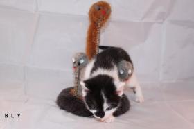 Foto 3 3 süße Kitten suchen neue Kuschelhöhle