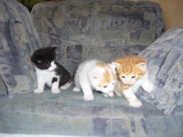 3 süße Maikater