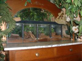 Foto 4 3 vogelspinnen