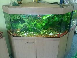 320 Liter 5-Eckaquarium mit Fische und Zubehör wegen Zeitmangel