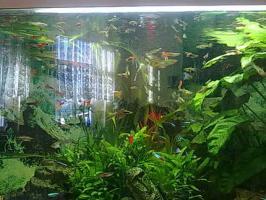 Foto 2 320 Liter 5-Eckaquarium mit Fische und Zubehör wegen Zeitmangel
