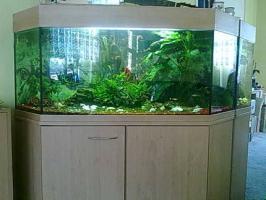 Foto 3 320 Liter 5-Eckaquarium mit Fische und Zubehör wegen Zeitmangel