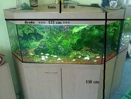 Foto 4 320 Liter 5-Eckaquarium mit Fische und Zubehör wegen Zeitmangel