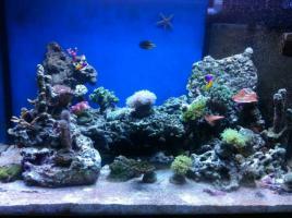 !!!! 360 Liter Aquarium (100x60x60) mit Technibecken und Unterschrank!!!!