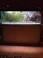 Foto 2 375 Liter Juwel Aquarium