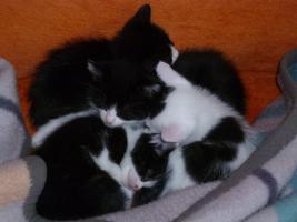4 Katzenkinder zu verschenken ca. 9 wochen alt