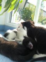 Foto 2 4 Katzenkinder zu verschenken ca. 9 wochen alt