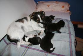 4 bildschöne Kätzchen