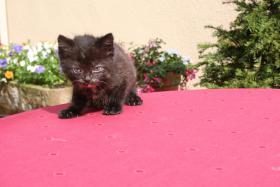 Foto 3 4 bildschöne Kätzchen