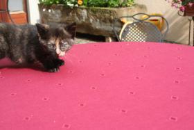 Foto 4 4 bildschöne Kätzchen