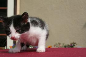Foto 5 4 bildschöne Kätzchen