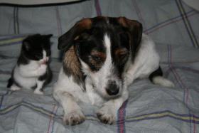 Foto 6 4 bildschöne Kätzchen