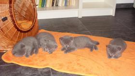 4 bkh kitten