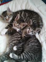 4 hübsche Katzenkinder suchen liebes zu hause!