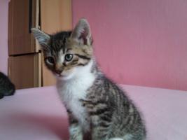 Foto 2 4 hübsche Katzenkinder suchen liebes zu hause!