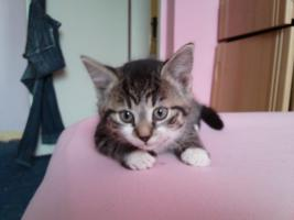 Foto 3 4 hübsche Katzenkinder suchen liebes zu hause!