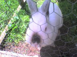 Foto 3 4 kaninchen suchen ein zuhause