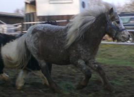 Foto 2 4 ponys zu verkaufen