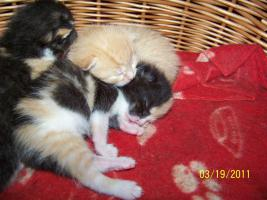 Foto 3 4 süße Kätzchen