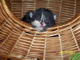 Foto 4 4 süße Kätzchen