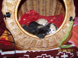 Foto 5 4 süße Kätzchen