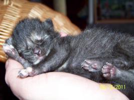 Foto 7 4 süße Kätzchen