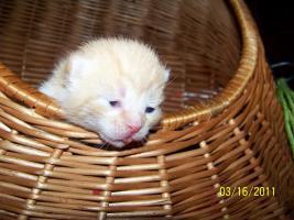 Foto 8 4 süße Kätzchen