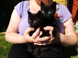 4 süße Katzenbabys abzugeben