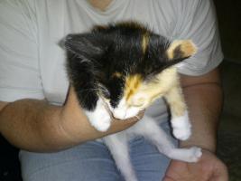 Foto 2 4 süsse katzenbabys,25euro schutzgebühr
