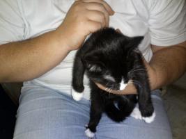 Foto 4 4 süsse katzenbabys,25euro schutzgebühr