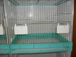 40, Kanarienvögel, 20.Zebrafinken, und 50.Zuchtboxen