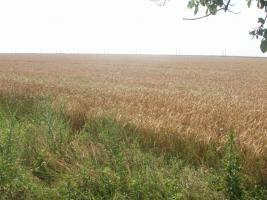 430 Hektar Ackerland in Westrumänien zu Verkaufen,