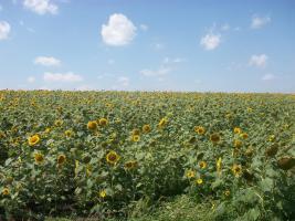 Foto 2 430 Hektar Ackerland in Westrumänien zu Verkaufen,