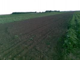 Foto 3 430 Hektar Ackerland in Westrumänien zu Verkaufen,