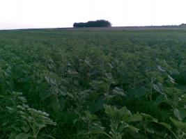 Foto 4 430 Hektar Ackerland in Westrumänien zu Verkaufen,