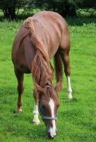 Foto 2 4jährigen Quarter Horse Wallach (Doc Chex Enkel) zu verkaufen