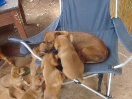 5 Doköwelpen suchen ab 14.08.2010 ein neues Zuhause