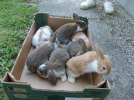 5 Kaninchenbabys zu verkaufen