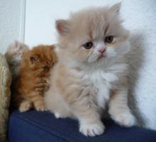 Foto 3 5 Katzen Babys
