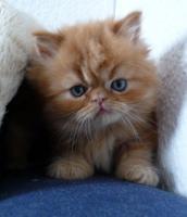 Foto 5 5 Katzen Babys