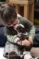 Foto 6 5 s��e Australian Shepherd Welpen suchen ein neues zu Hause