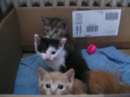 Foto 3 5 wunderschöne Katzenbabys ab sofort abzugeben