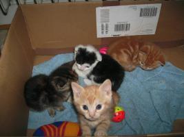Foto 4 5 wunderschöne Katzenbabys ab sofort abzugeben