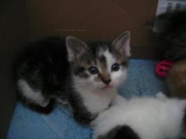 Foto 6 5 wunderschöne Katzenbabys ab sofort abzugeben