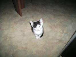 Foto 7 5 wunderschöne Katzenbabys ab sofort abzugeben