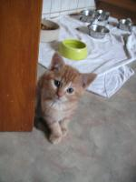 Foto 8 5 wunderschöne Katzenbabys ab sofort abzugeben