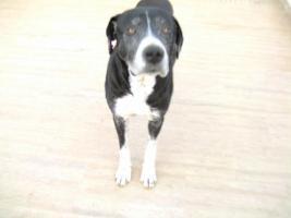 Wachhund126