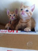 6 BKH Katzenbabys
